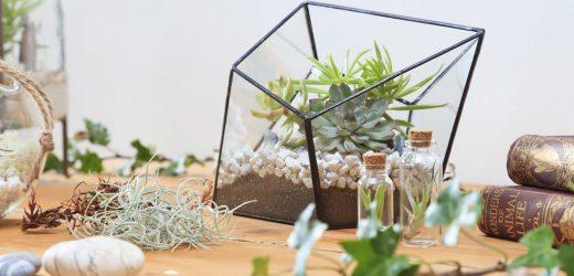 Get Workshop With Terrarium Singapore