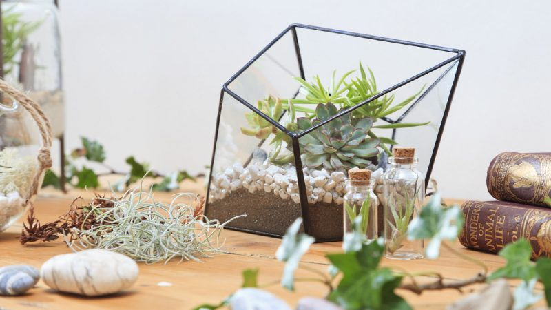 Get Workshop With Terrarium Singapore